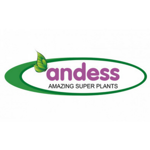 andess